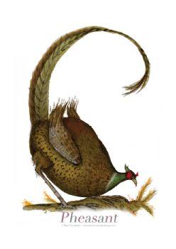 Pheasant - signed print